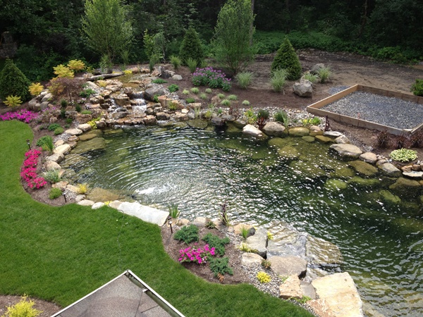 Tips for a low maintenance backyard pond decker 39 s for Fish pond maintenance