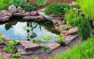 Deckers-summer-pond-maintenance-page