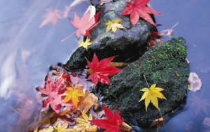 deckers-landscape-pond-maintenance-leaves-fall